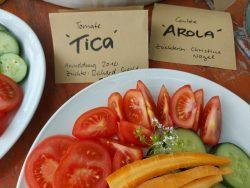Gemüse aus Bio-Züchtung
