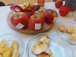 verschiedene Äpfel liegen zur Verkostung bereit
