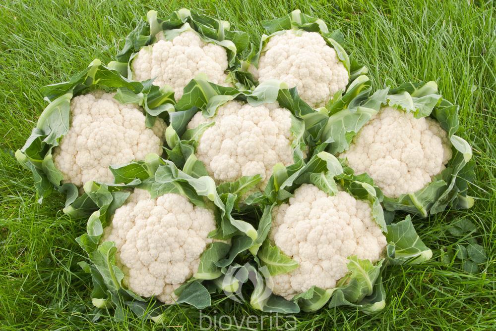 Blumenkohl Nuage