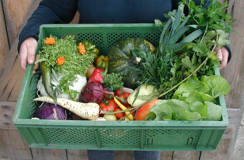 Gemüsekiste ReinSaat KG