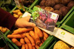 Gemüse im Regal mit bioverita-Postkarte