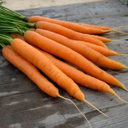 Karottensorte Amiva