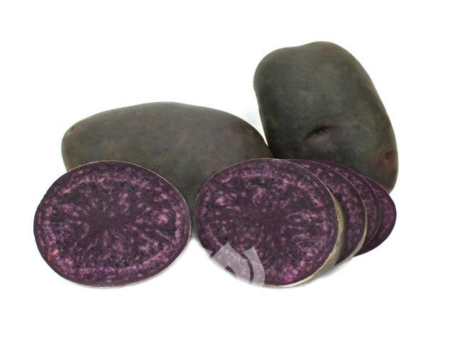Kartoffelsorte Blaue Anneliese von Ellenberg`s Kartoffelvielfalt