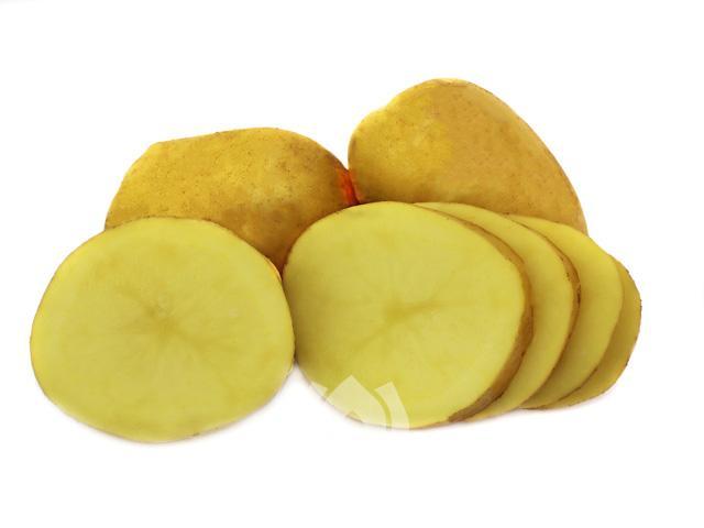 Kartoffelsorte Heidemarie von Ellenberg`s Kartoffelvielfalt