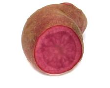 Kartoffelsorte Rote Emmalie von Ellenberg`s Kartoffelvielfalt