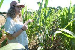 Kathrin Buhmann erläuter die Maiszüchtung