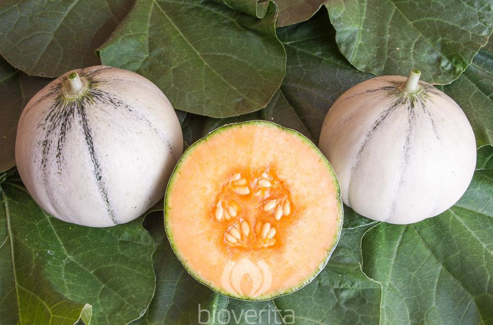 Melone Murrmel