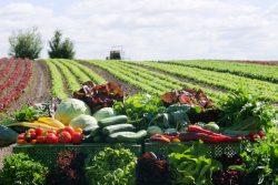 Gemüsepalette der Gärtnerei Watzkendorf