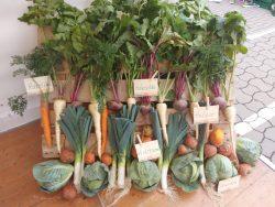 Palette mit Gemüse bei der Terra-Hausmesse