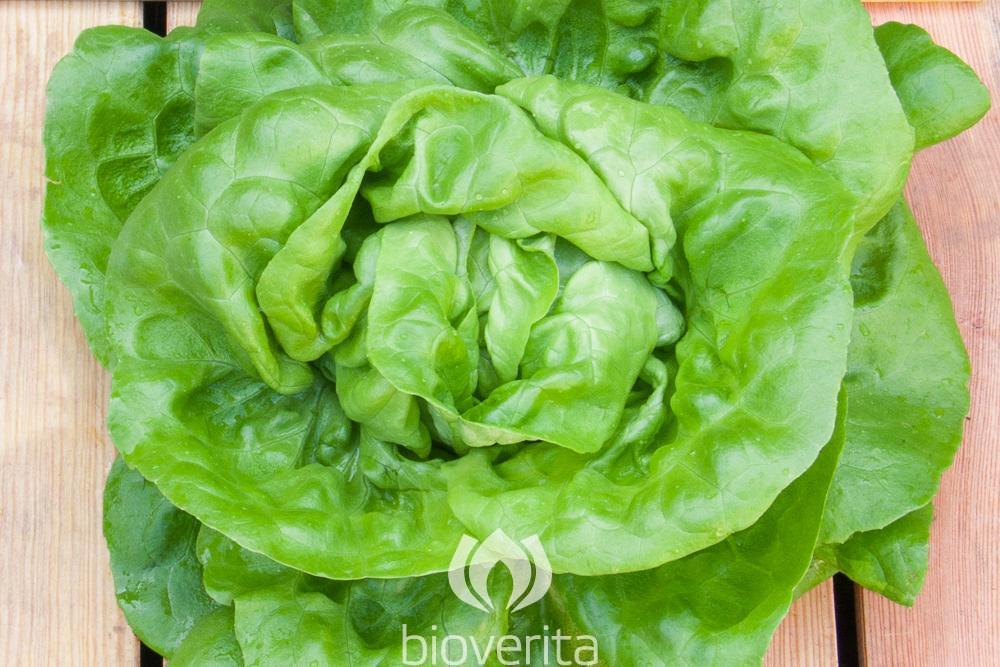 Salat Briweri