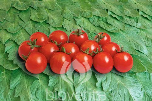 Tomate Philamina