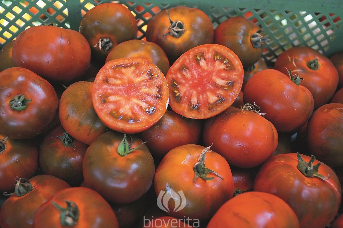 Tomate Revilla
