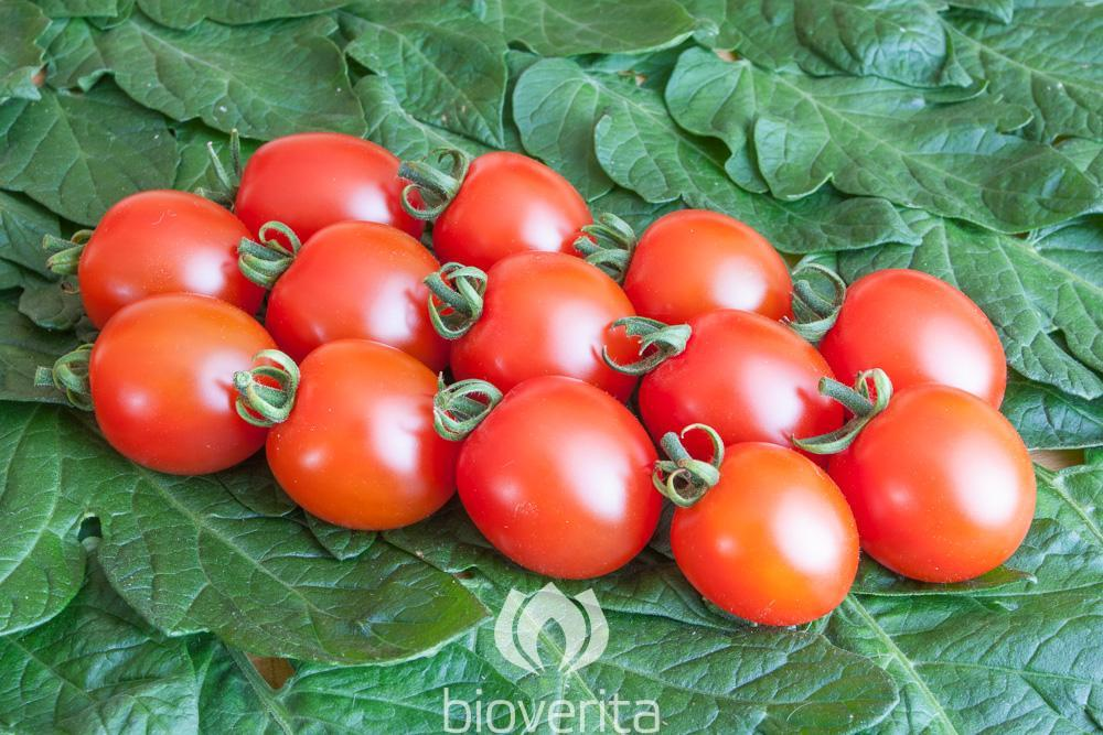 Tomate Trixi