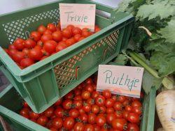 Tomaten Ruthje und Trixie bei der Terra Hausmesse